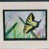 butterflies flying over grass
